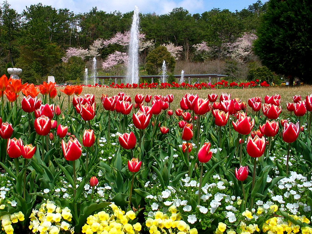 チューリップの花 春の花の壁紙写真 花の無料壁紙写真 花の無料写真